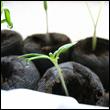 organic vege starters